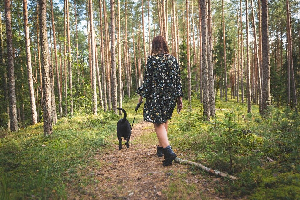 7 Tips For Creating A Healthy Lifestyle For Your Dogs