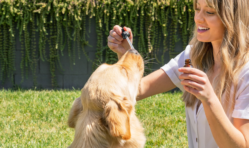 CBD Oil Vs CBD Tinctures: Which one is best for your pets?